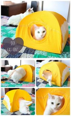 How To Make A Simple DIY Cat Tent With A T-shirt & Two Hangers 2 - Finally, we have found one really good use of your big old T-shirt: make it into a nice tent for your cat. With a t-shirt and two cloth hangers, you can easily make this simple cat tent. If you have a cat, you should not let go this project. Continue reading the step by step instructions… #cattenthomemade