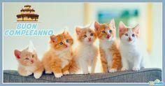 cartoline-compleanno-con-gatti-4