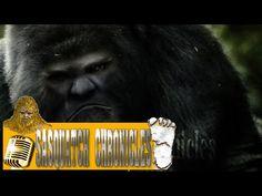 Bigfoot Hotspot Radio // SC EP:111 What was that? [Sasquatch Chronicles]