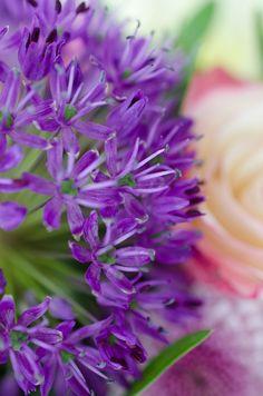 BLÜTENZAUBER // Ein bezaubernder Farbdreiklang für sommerliche #Gefühle. Wundervolle #Rosen in #Lila und #Rosa sowie grün-weiße #Blüten, Phlox, #Gerbera und #Chrysanthemen überzeugen mit all ihrer #Kraft und #Schönheit. #blumen #allium #flower #blume2000 #blume2000de // Lieferbar bis zum 17.07.2015