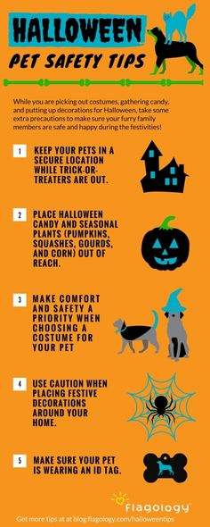 Halloween Pet Safety Tips for Dogs and Cats: while you are picking out costumes, gathering candy, and putting up decorations for Halloween this year, take some extra precautions to make sure your furry family members are safe and happy during the festivities!