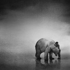 """De Indonesische kunstenaar Elicia Edijanto is gefascineerd door de band tussen dieren en kinderen. In haar zwarte aquarellen zie je zelfs roofdieren zoals jachtluipaarden en beren die een directe en intieme band hebben met kinderen. Ze vergezellen de kinderen in de boot en mistige landschappen.  """"De natuur inspireert me. Je ziet in mijn werk vaak kinderen en dieren, omdat ze oprecht zijn, onbevooroordeeld en pretentieloos. Er is een aangeboren relatie tussen hen """", zegt de Edijanto."""