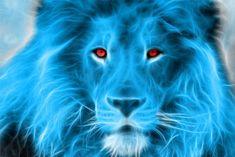 Lion 3d Wallpaper Hd Betty Boop Pinterest Blue Lion Lions