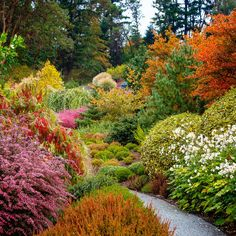 Autumn glow - How to Get Great Fall Foliage in Your garden - Sunset