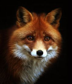 How can you look into the eyes of an animal and deny that there is soul and power in nature?
