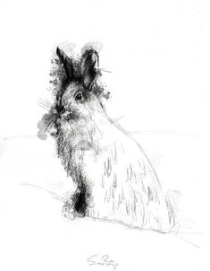 Snowshoe, Artist Sean Briggs producing a sketch a day, prints available at https://www.etsy.com/uk/shop/SketchyLife  #art #drawing #hare #http://etsy.me/1rARc0J