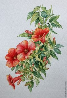 """Купить Рисунок """" Красные цветы (текома)"""" акварель - красные цветы, южные цветы, акварель"""