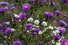 Осенеее сиренево белое цветочное настроение - залог удачности в делах и семейного благополучия