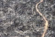 Forest fires, allegedly set by farmers and cattle ranchers, in Mato Grosso, Brazil. Amazon Rainforest Deforestation, Aerial Images, Local Photographers, Destruction, Ecology, Wildlife, Around The Worlds, Climate Change, Trees