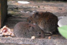 http://news-all-the-time.com/2014/04/08/scientists-uncover-why-booze-makes-women-touchy-feely-and-men-unfaithful-by-observing-drunken-voles/ - Scientists uncover why booze makes women touchy-feely and men unfaithful by observing drunken VOLES  -  Researchers at an Oregon university used the famously faithful prairie vole to test how alcohol affects relationships The study found that drunk male voles tended to stray more often while the females wanted more cuddle time Alcohol