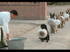 Ridiculously Disciplined Dogs  I bet our parents would train us like this if they could…