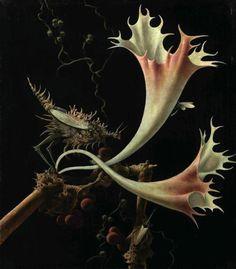 View Blüten und Insekten by Franz Sedlacek on artnet. Browse upcoming and past auction lots by Franz Sedlacek. Sibylla Merian, George Grosz, Cool Paintings, New Artists, Teaching Art, Botanical Art, Natural History, Flower Art, Art Flowers