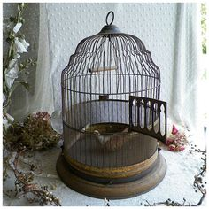 Old bird cage