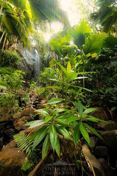 Spririt of an ancient Jungle by Stefan Hefele on 500px