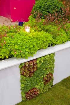 Inventive use of sedums and succulents growing in a garden wall, with garden light
