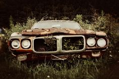 This Firebird deserves to be brought back to life, someone please restore it.