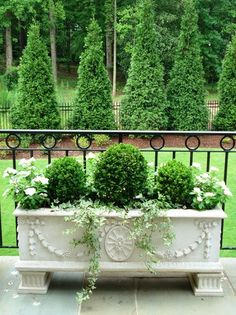 lovely... a beautiful planter..... all evergreens in the background