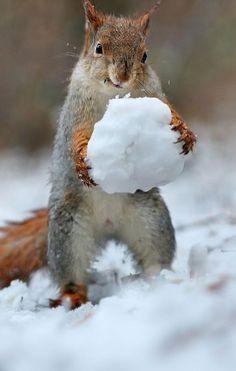 Squirrels love snow days too!