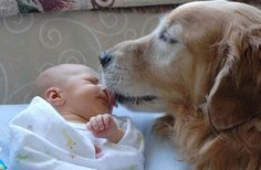 Adorable Cats And Dogs Meeting Babies For The Very First Time!! - Animal Stories