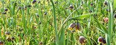 Spring Flowering Bulbs, Spring Bulbs, Bird, Garden, Plants, Animals, Color, Garten, Animales