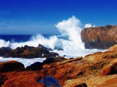 Point Lobos, Monterey, Calif.