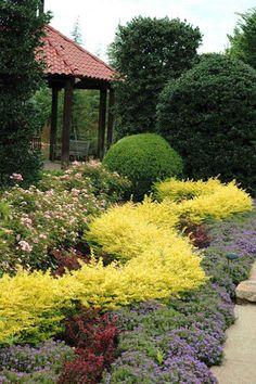 Buy Sunshine Dwarf Ligustrum - FREE SHIPPING - 2 Gallon Size Hedge Bushes For Sale Online From Wilson Bros Gardens