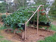 love this idea for cucumbers or squash... could grow the lettuce and other shade lovers under it and still get to everything easily!!!