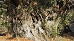 Kythera Top 20 | Guesthouse Xenonas Fos ke Choros | a Greek island