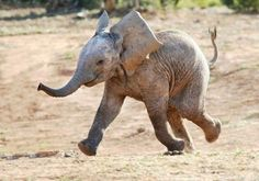 baby elephants are like 300lb puppies