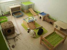 Amazing bunny setup