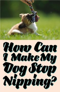 How can I stop my dog from nipping? Get the insider secrets!