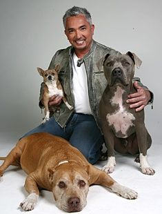 Cesar Millan, Daddy, and Junior. Daddy was so wonderful to watch when Cesar would work with other dogs. Quite the special dog. Cesar Millan, Celebrity Dogs, Dog Whisperer, Milan, Pit Bull Love, Mans Best Friend, Dog Life, Puppy Love, Fur Babies