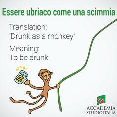Learning Italian Language ~ Essere ubriaco come una scimmia | Italian Expression drunk as a monkey via http://accademiastudioitalia.com/