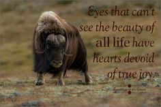 Eyes that can't see the beauty of all life have hearts devoid of true joy #beauty #love #respect #compassion #animals #muskox