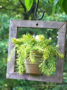 Framed plants~So cute!