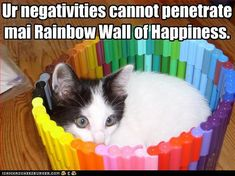 Cat in rainbow