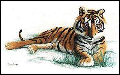 Gallery.ru / Фото #1 - Tiger - mornela