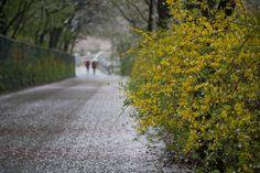 spring,seoul,KOREA by e.s lee