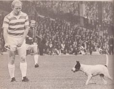 Jimmy Johnstone and a dog Football Images, Football Pictures, Celtic Fc, Vintage Football, Dogs, Glasgow, Pitch, Legends