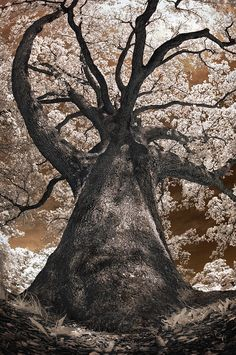 """Let nothing stop you from growing."" Giant White Oak. Photoshop. Stephen Zimic. His portfolio: http://members.photoshopuser.com/762732/portfolio"