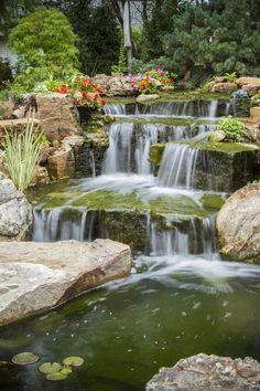 Main waterfall that empties into the 6,600 gallon backyard koi pond.