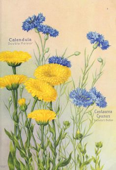 1922 - Seed annual : - Biodiversity Heritage Library