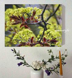 Frühling, Baumblüte, FOTO von GIMOOTO, Motiv gedruckt auf Satin Canvas Leinwand