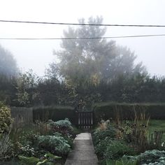 Throw back Thursday to a quiet and misty morning in the cottage garden. Beyond the mist are the Hampshire hills, we love this view from the front door, however it's slightly hampered by those pesky telephone lines!  #mistymorning #cottagegarden #cottagelife #hampshire #hampshirehills #tbt