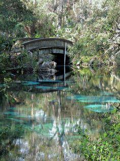 turquoise pool fern hammock springs florida