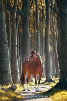 Fascinée par les chevaux, la photographe allemandeWiebke Haasa décidé de rendre hommage àces animaux majestueux avecune série dephotographies env