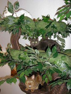 ~Hidden Hollow~ Cat Trees