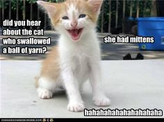 funny pictures - kitteh jokes