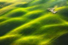 25 troupeaux de moutons qui vont vous donner envie de batifoler dans les prairies !
