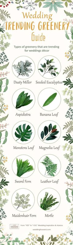 Wedding Greenery Guide for our Brides to be!